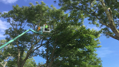 Ballyandreen Tree Crown Pruning