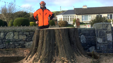 Tree Removal in Lisheen Cross